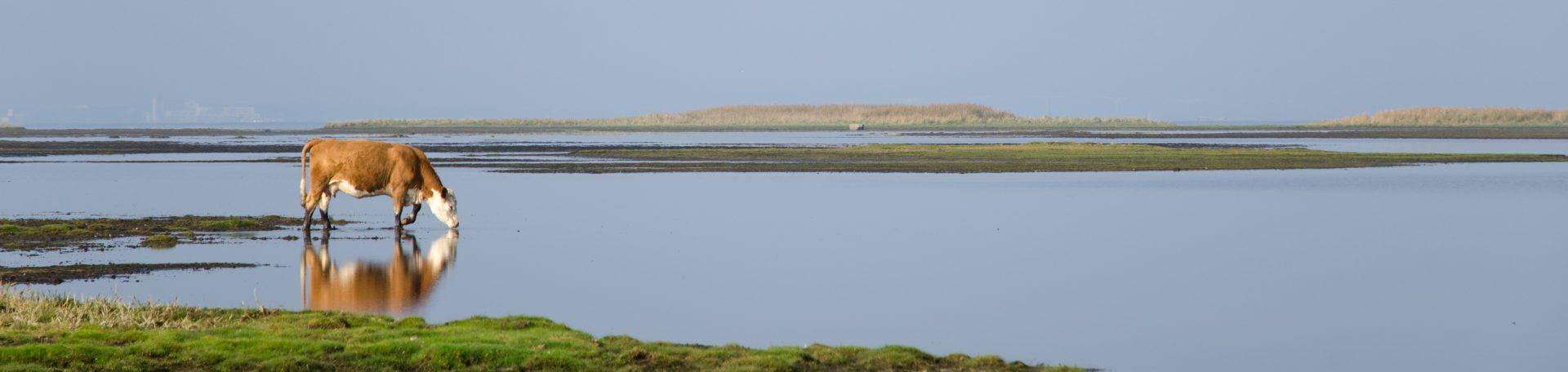 Naturreservat på Öland